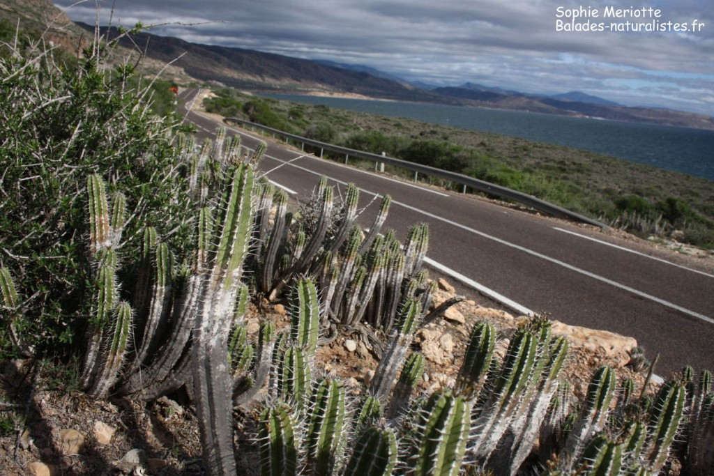 maroc (12)route-agadir