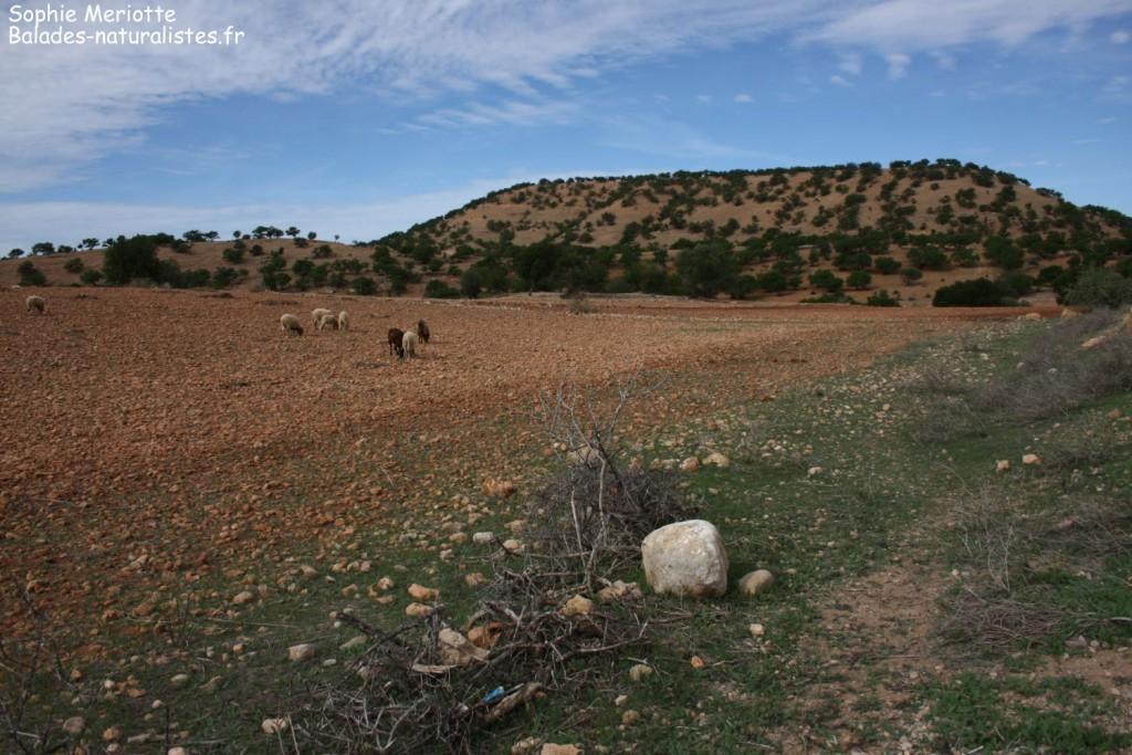 Route pour Sidi Kaouki