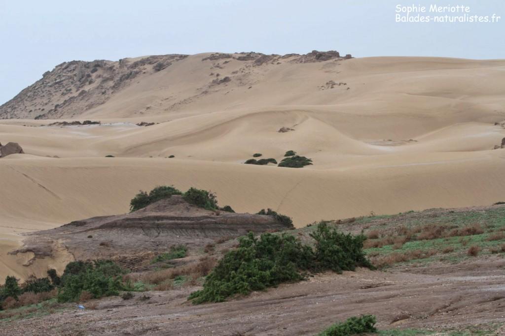 Dunes de Tamri