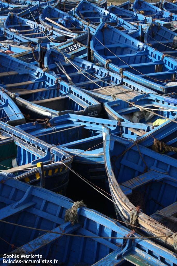 Bateaux de pêche à Essaouira