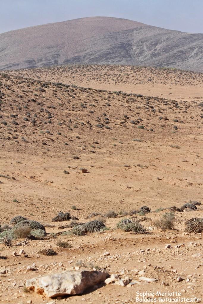 Paysages au sud de Goulimine
