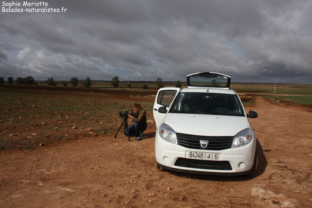 Observation sur la route en direction de Had Touabet
