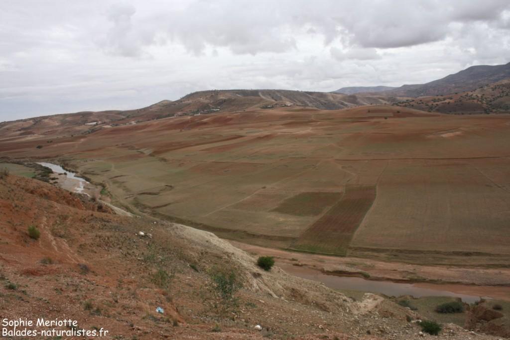 Oued Tensif