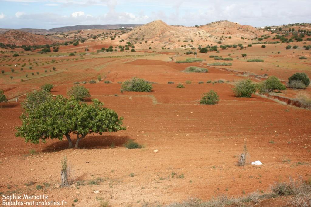 Route en direction de Had Touabet