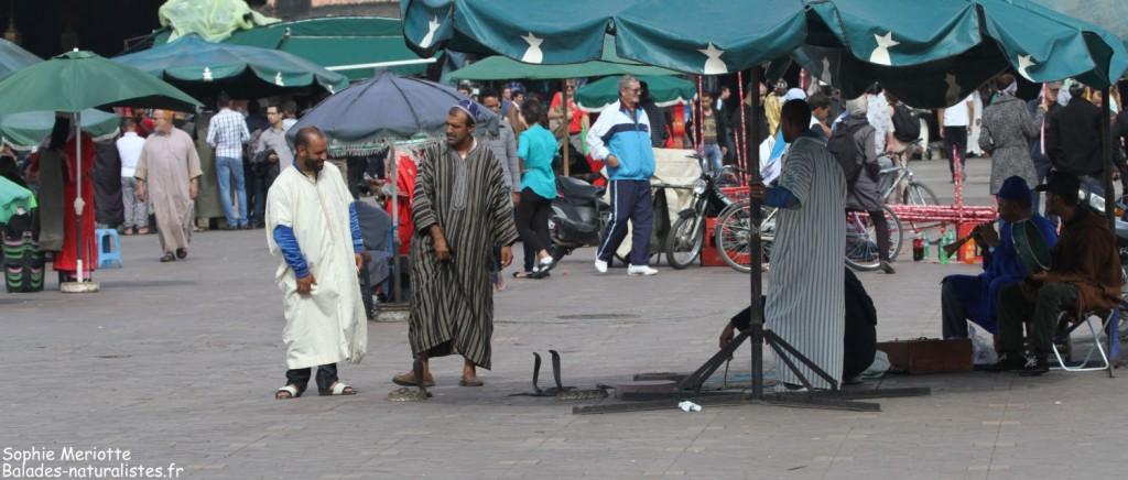 Marrakech, les montreurs de serpents de la place Jemaa el Fna