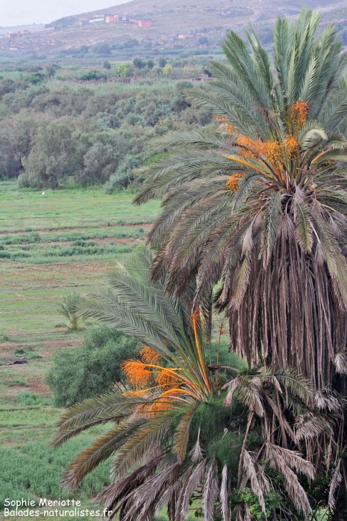 Vergers autour de l'Oued Massa