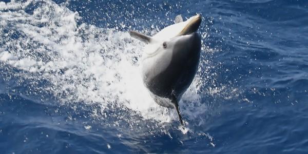 Sortie d'observation des baleines et dauphins du 24 septembre : ambiances nordiques