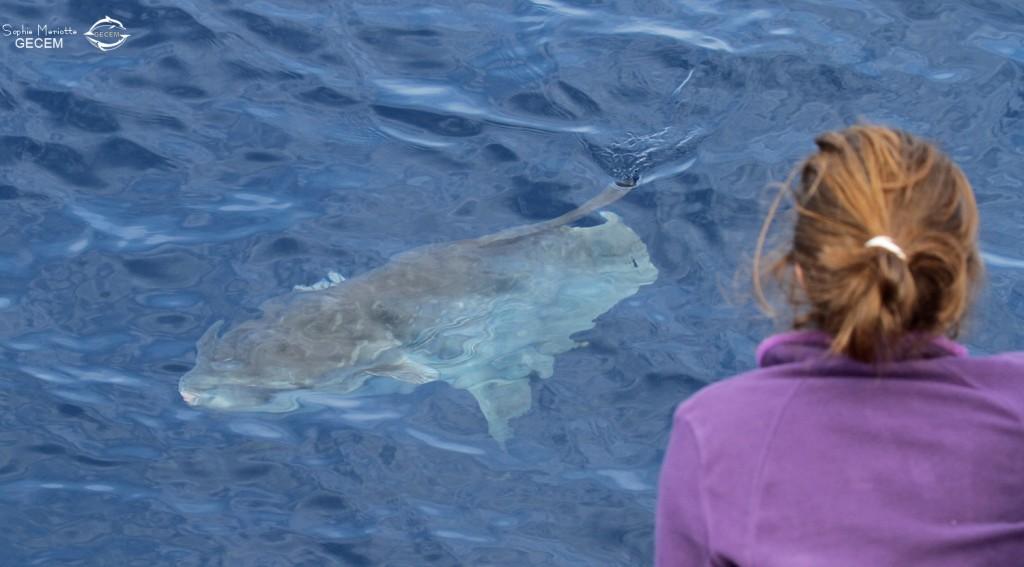 Un poisson lune curieux passe près du bateau