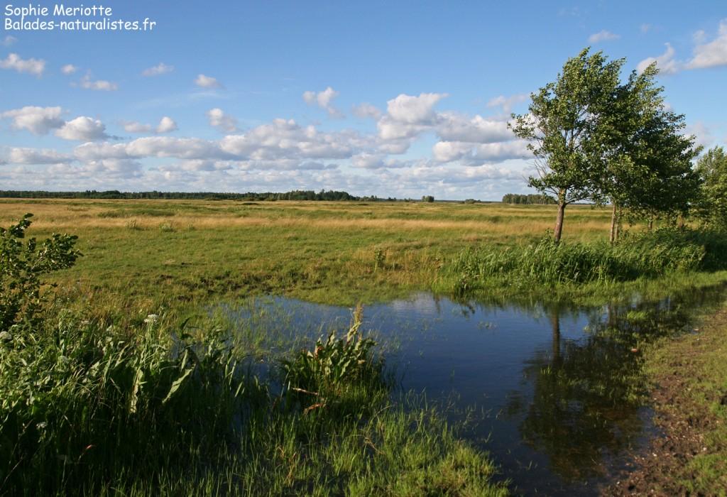 Marais de Blaly Grad