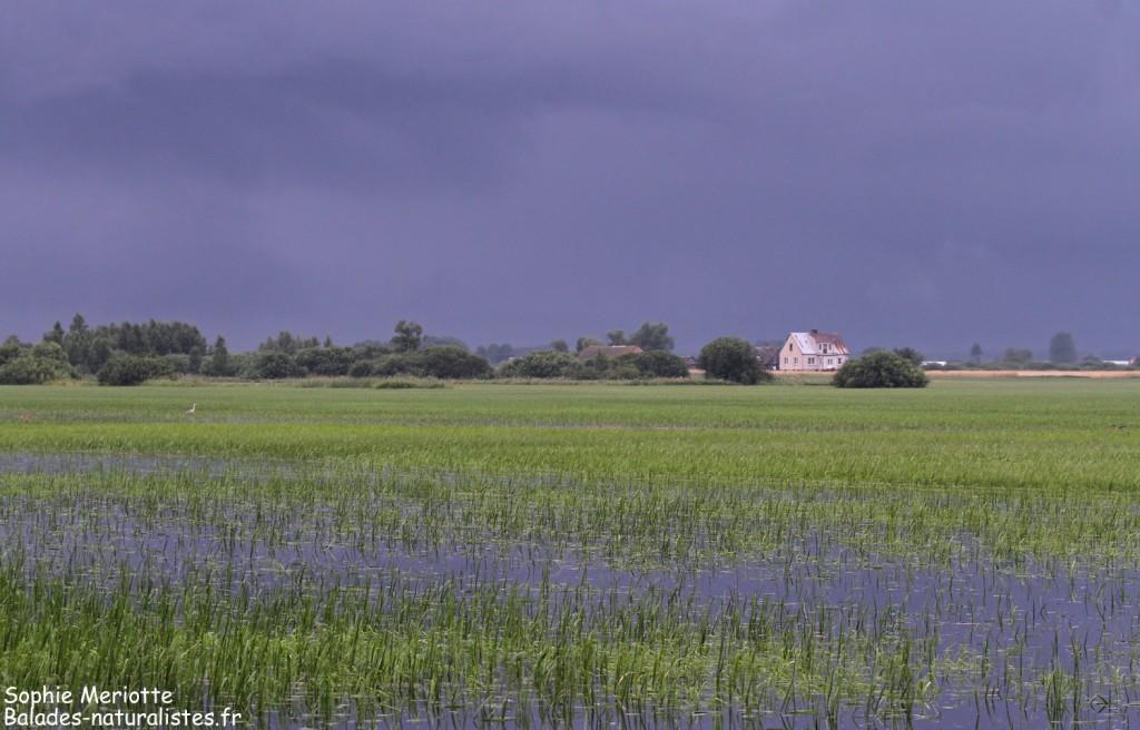 Piste entre Dolistowo et Jasionowo, Parc national de Biebrza