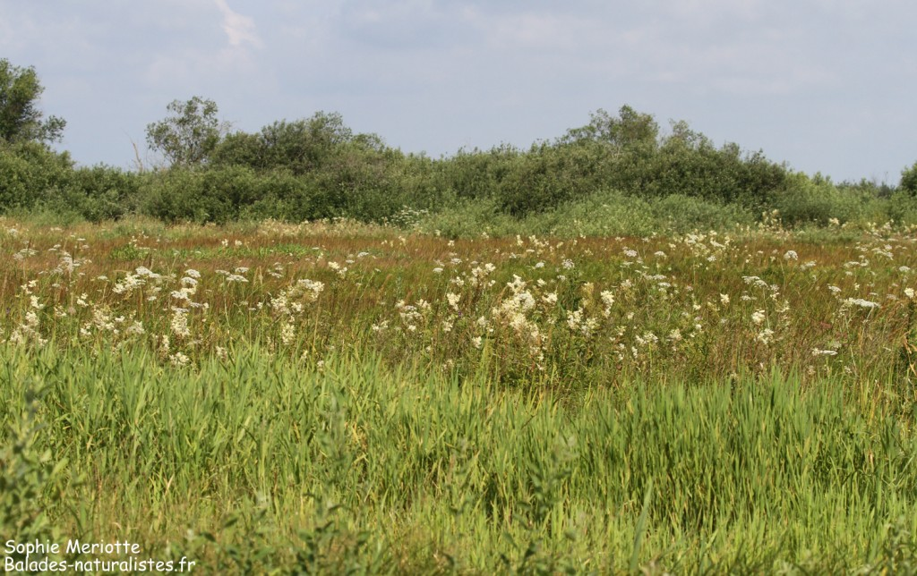 Paysages le long du sentier au départ de Barwik, Parc national de Biebrza
