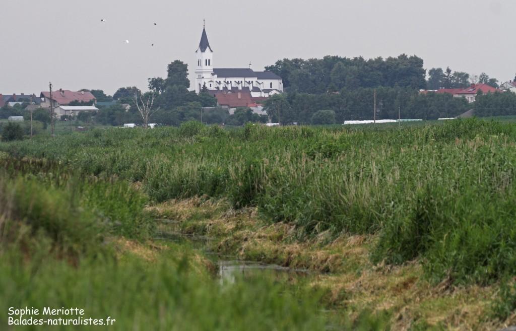 Avant l'orage, Pisciculture de Knyszyn Zamek