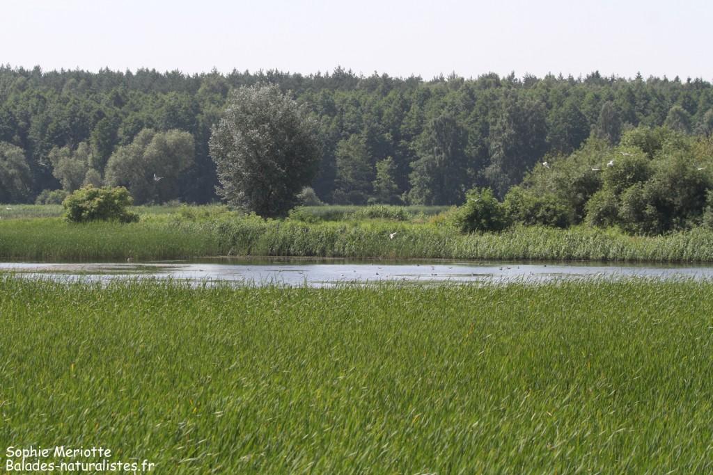 Pisciculture de Dojlidzy près de Bialystok