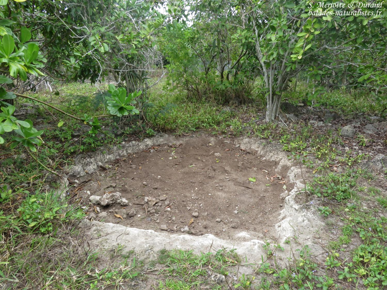 Site de ponte pour tortue d'Aldabra, L'île aux aigrettes