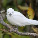 L'île aux Cocos, le paradis des oiseaux