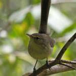 Où observer les oiseaux endémiques de Rodrigues ? La Réserve de Grande Montagne
