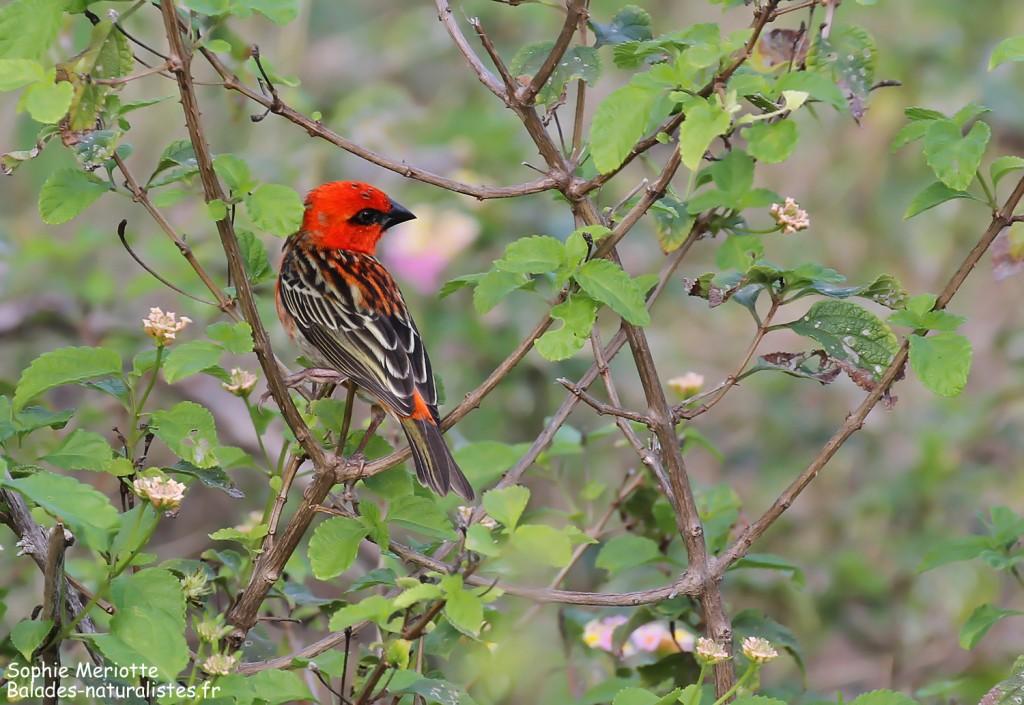 Cardinal de Madagascar sur le sentier de St François