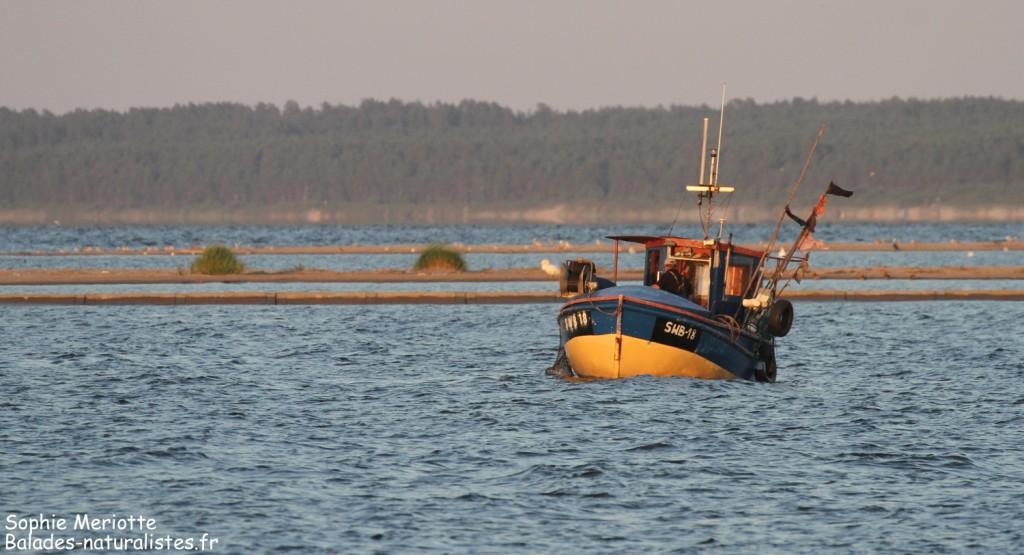 Pêcheurs dans l'embouchure de la Vistule