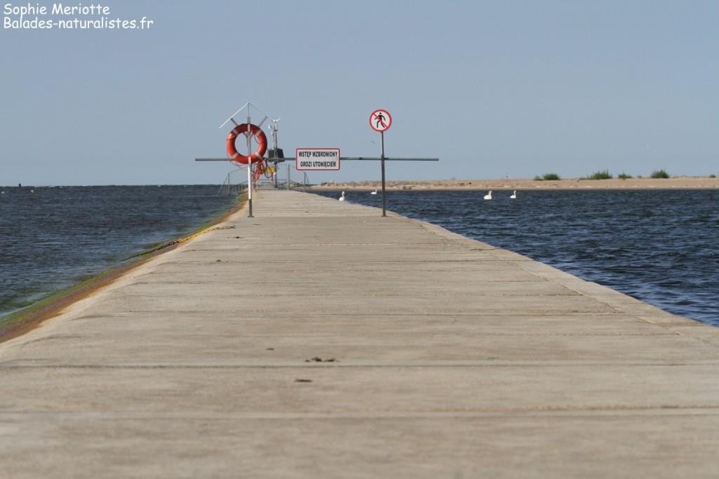 Digue le long de la rive est de la Vistule, Reserve Mewia Łacha