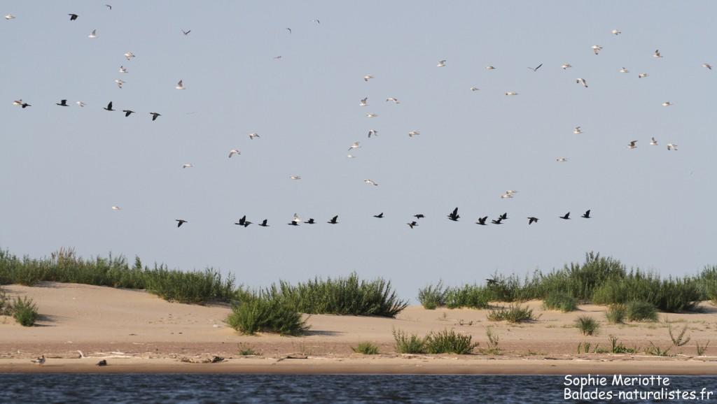 Dunes de la Reserve Mewia Łacha