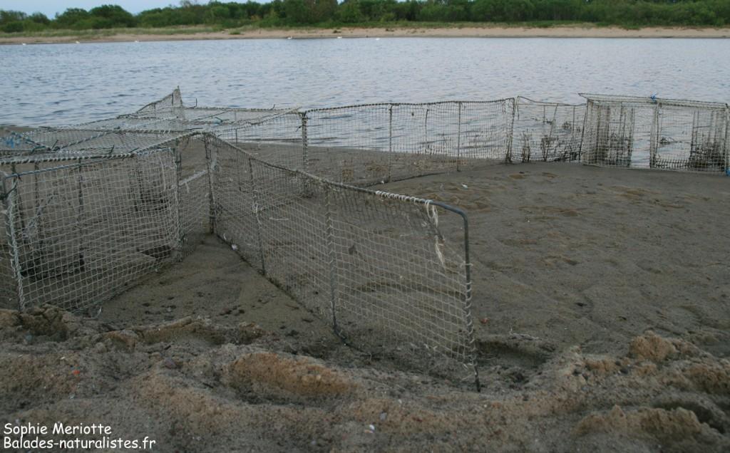 Station de baguage des limicoles dans la Nature Reserve Mewia Łacha