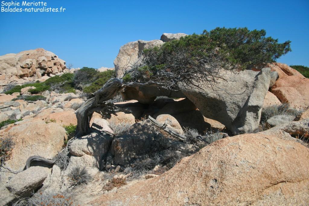 Boucle de Canuseddu, Campomoro