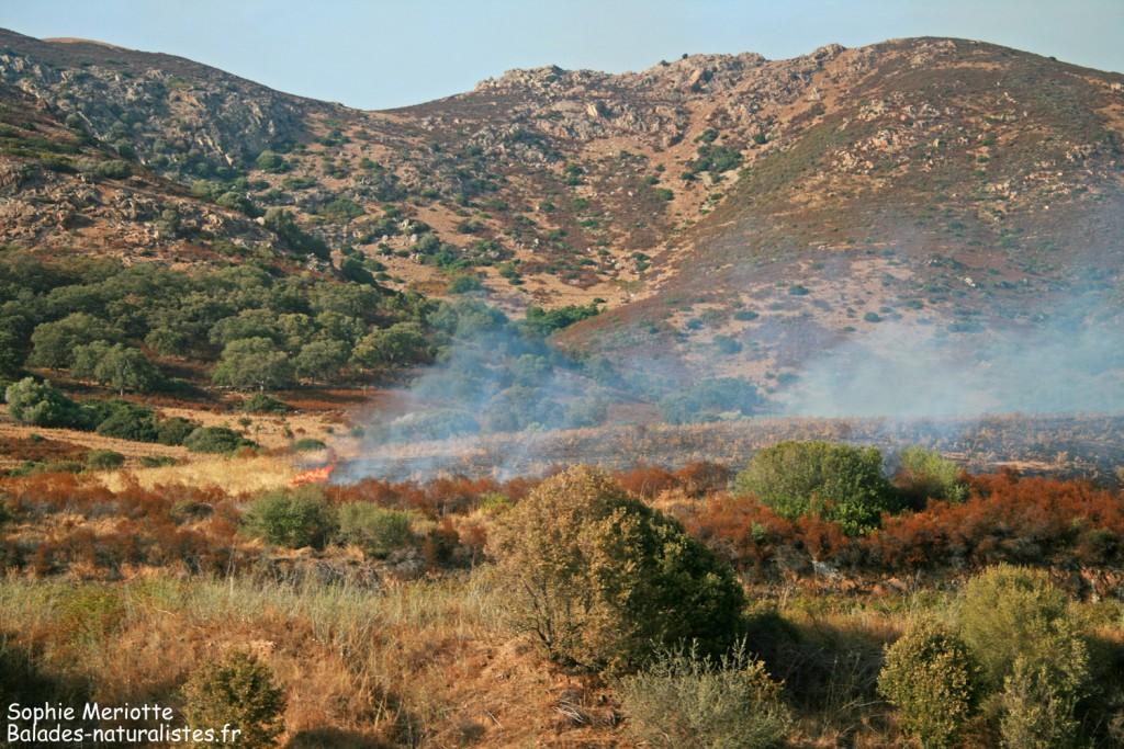 Incendie sur la route d'Ajaccio