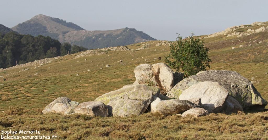 Blocs de granite sur les hauteurs du val d'Ese