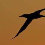 Première sortie d'observation des oiseaux de la saison avec Découverte du Vivant : les hivernants sont arrivés