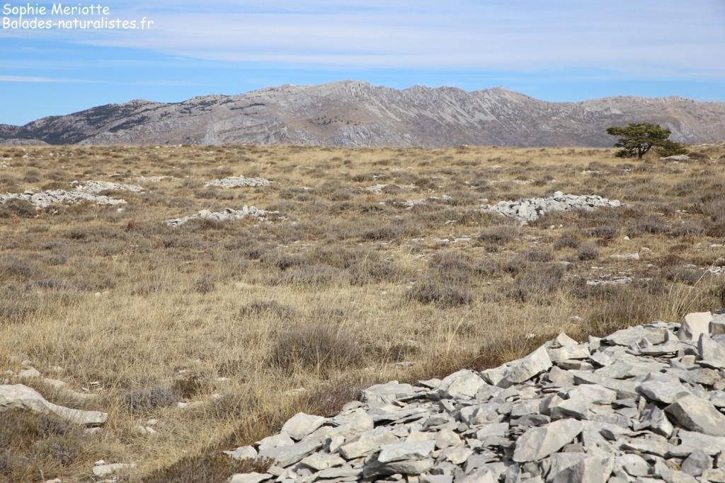 Plateau de Calern et la montagne du Cheiron