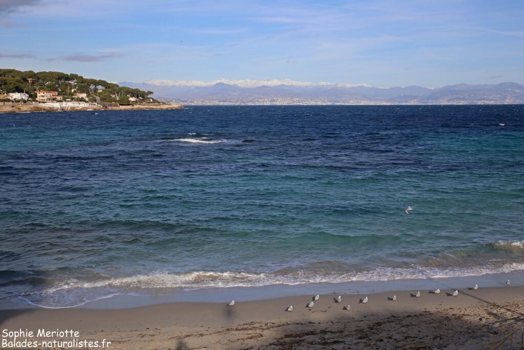 Cap d'Antibes, Plage de la Garoupe