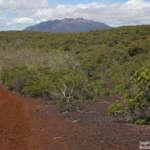 Le Plateau de Tia