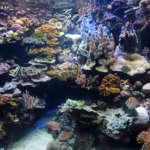 Aquarium des lagons, entre rêve et réalité