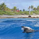 Rangiroa, le plus grand atoll de Polynésie française