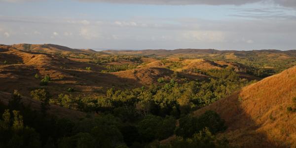 Sunrise sur la brousse calédonienne